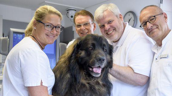 Hautnah: Die Tierklinik