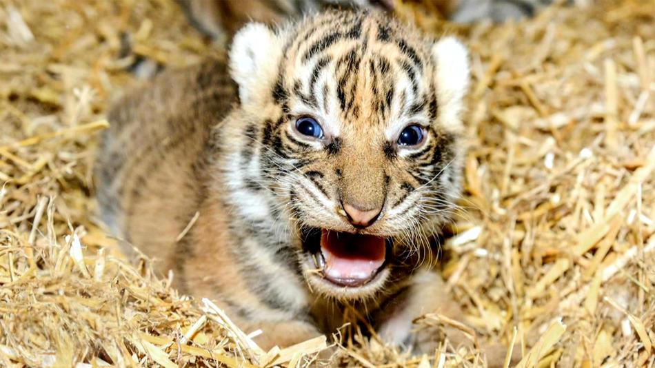 Tierbabys – süß und wild!